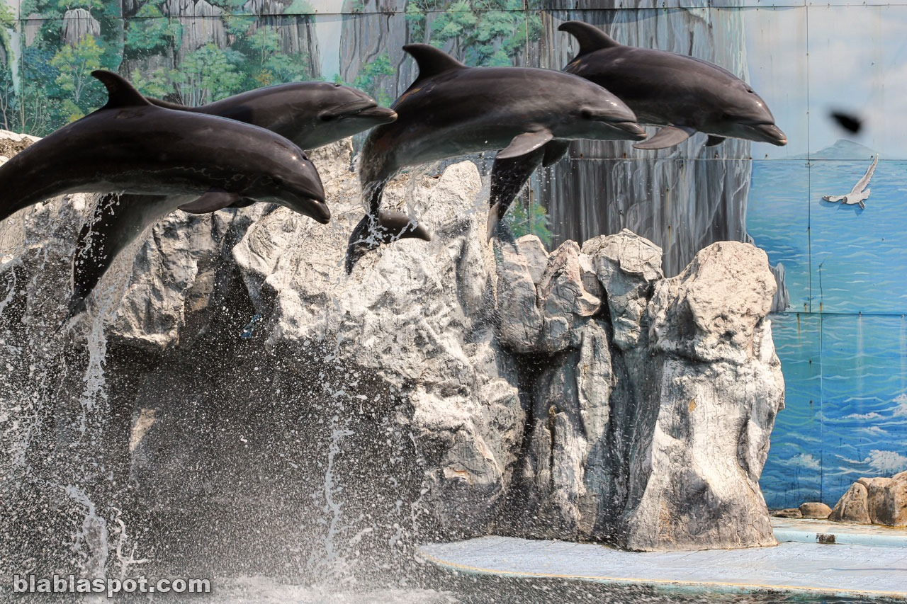 Safari world, dolphins
