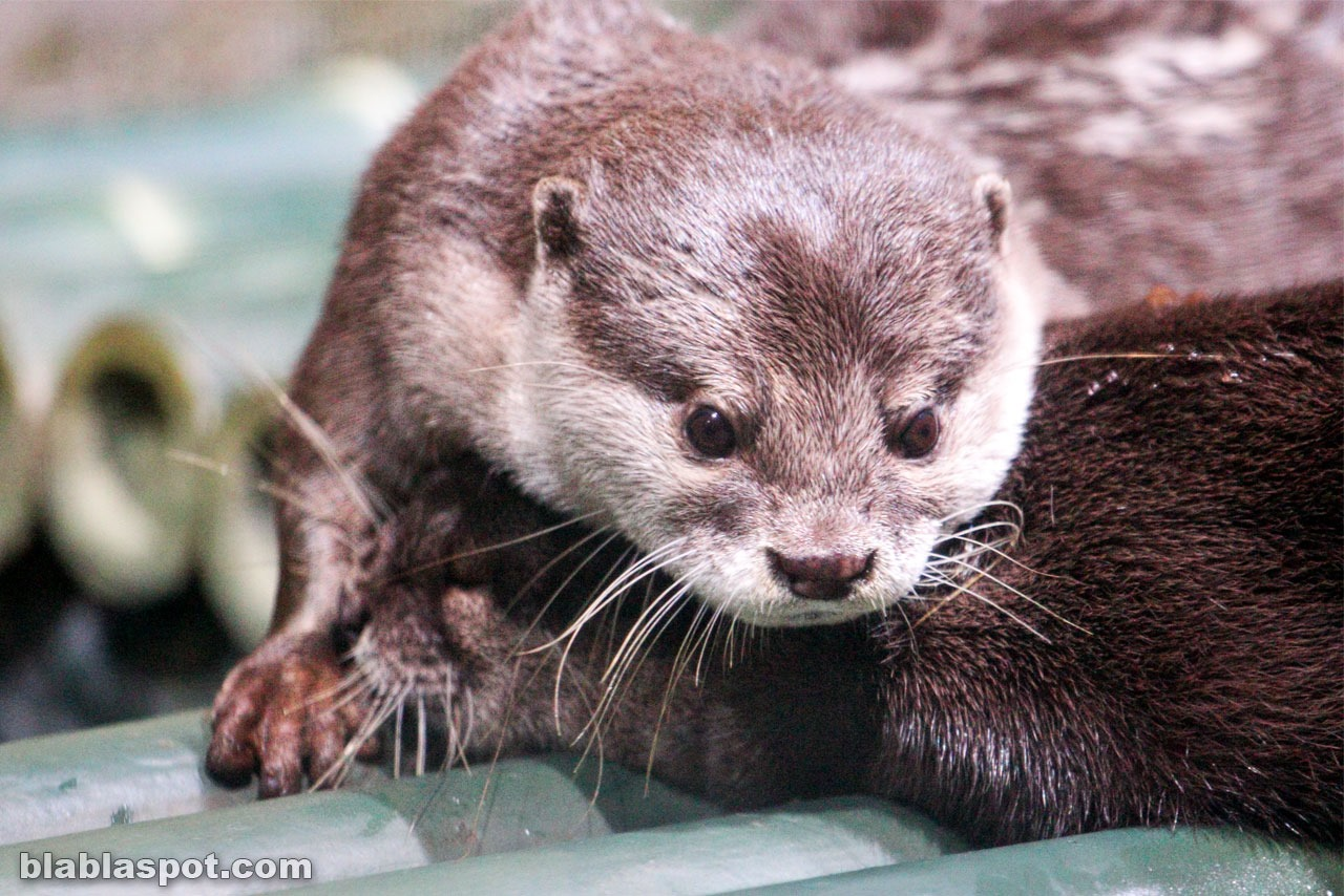 Bangkok, sealife_otter