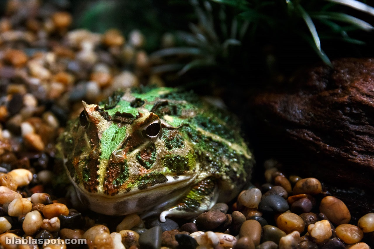 Bangkok, sealife_toad