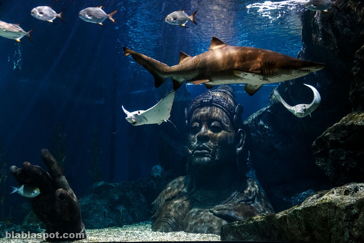 Bangkok, sealife_shark