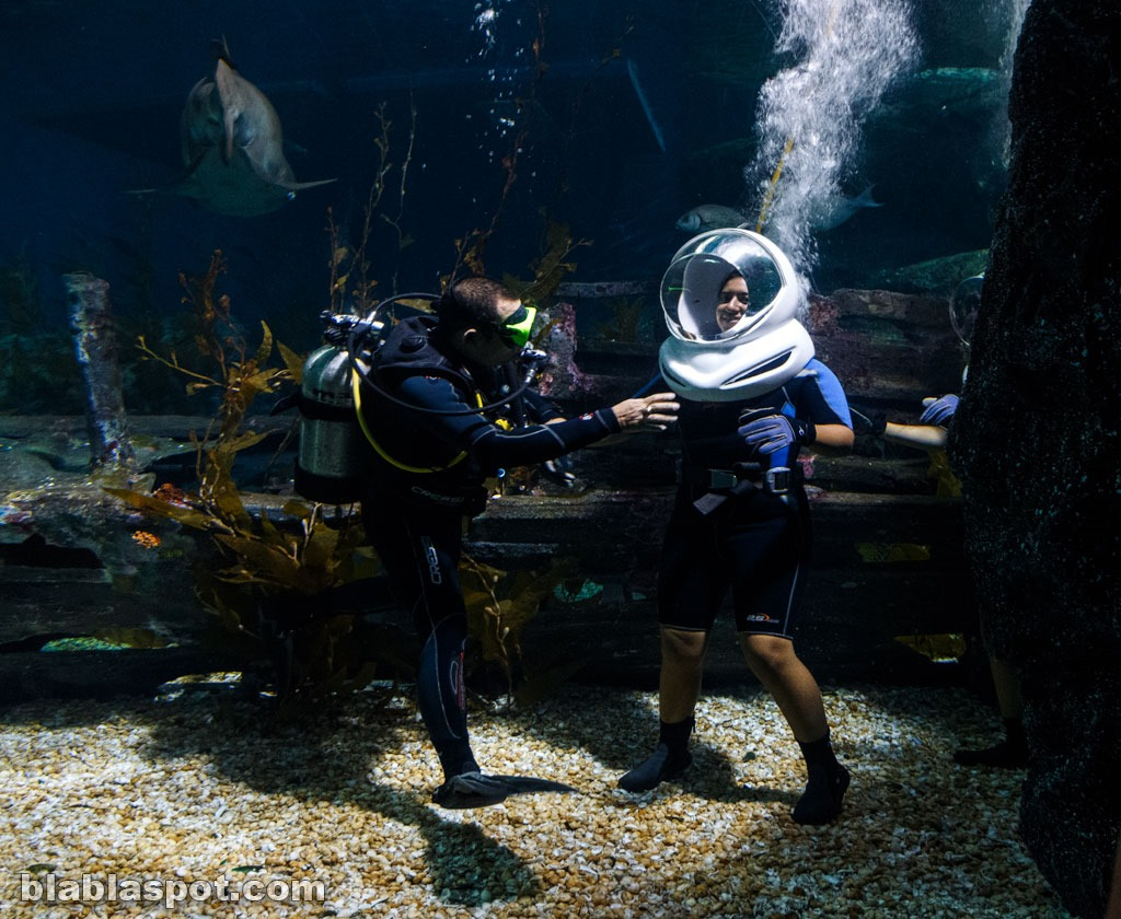 Bangkok, sealife_aqualang